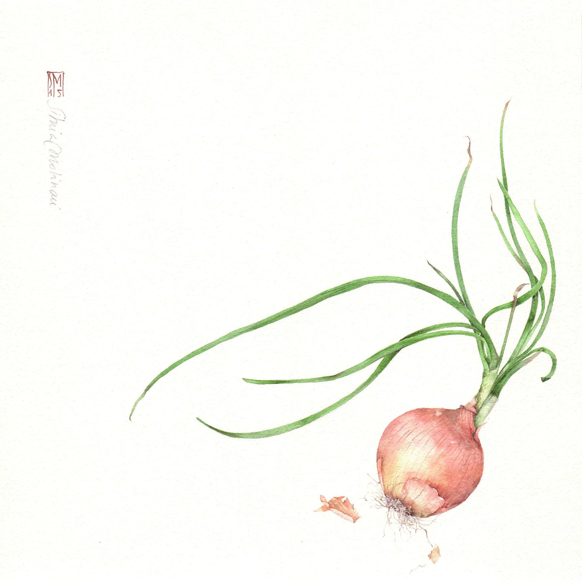 Preferenza Works - Silvia Molinari artista, acquerello botanico, disegno  AB37