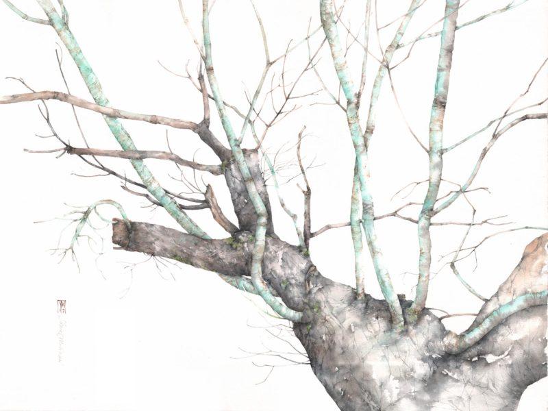 Estremamente Silvia Molinari artista, acquerello botanico, disegno naturalistico BA03