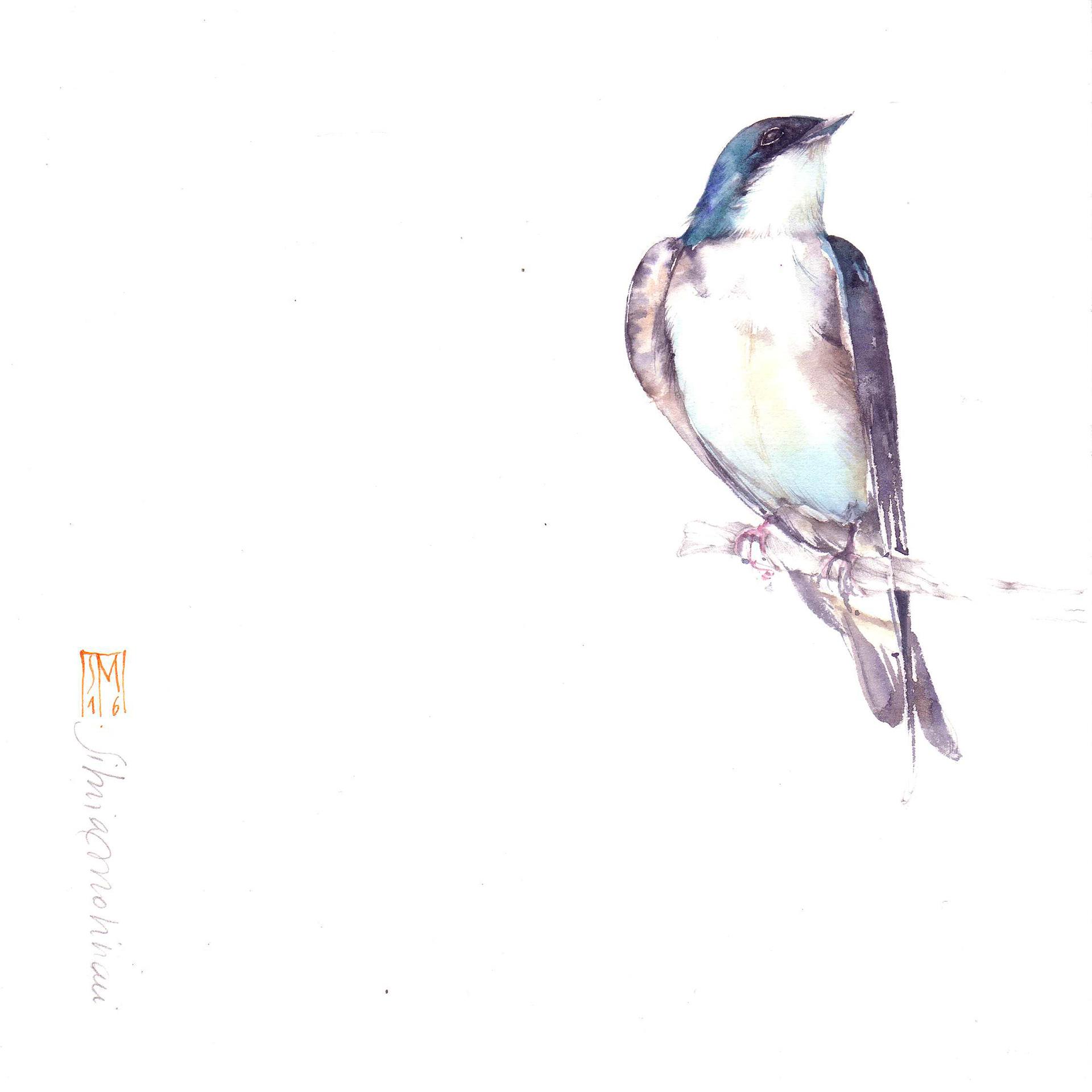 Favorito Works - Silvia Molinari artista, acquerello botanico, disegno  AE68