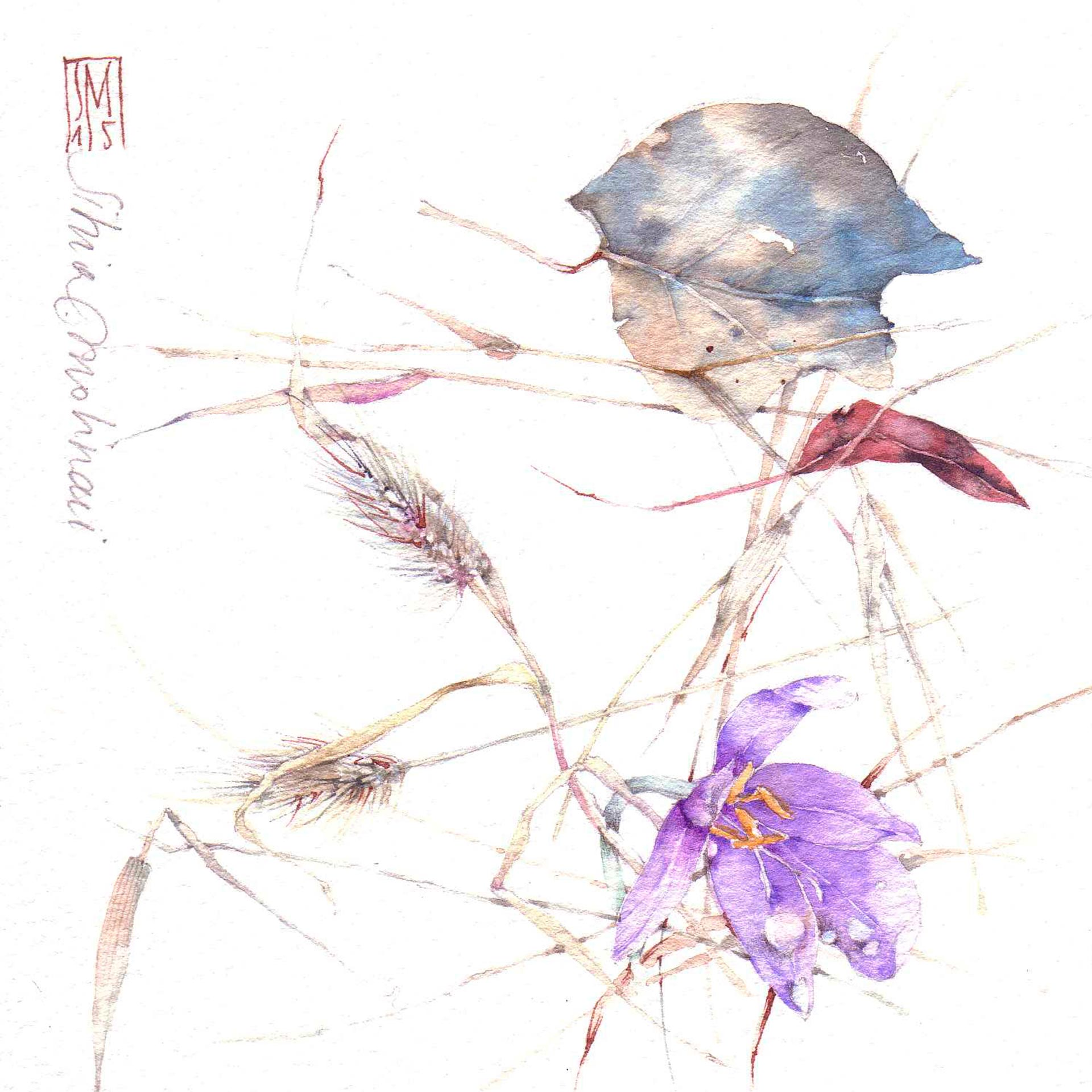 Amato Works - Silvia Molinari artista, acquerello botanico, disegno  MC23