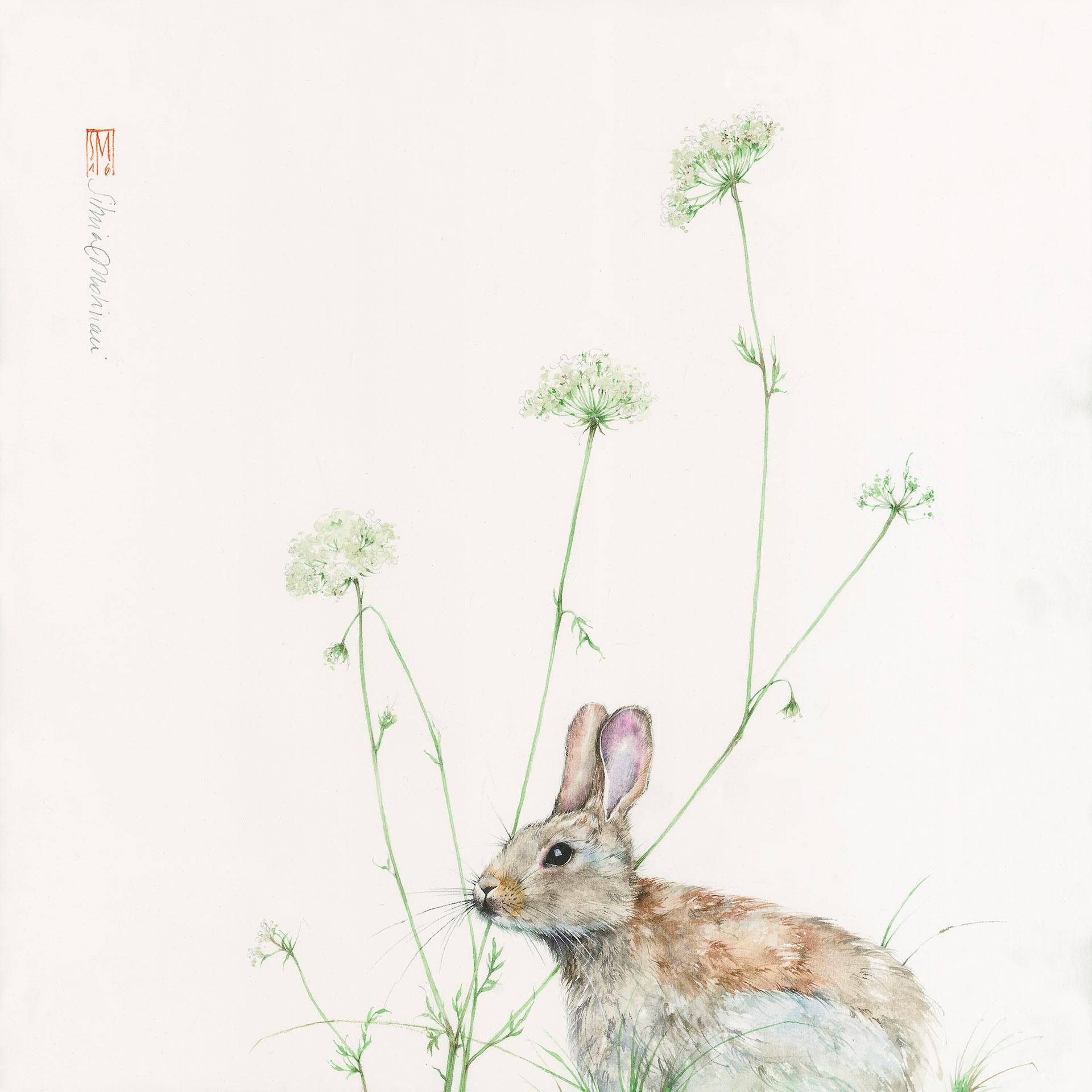 Super Silvia Molinari artista, acquerello botanico, disegno naturalistico GR62